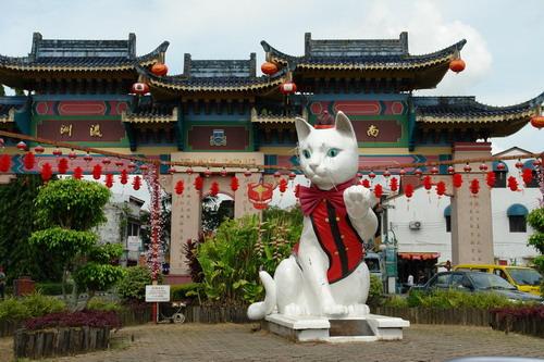 Kuching white cat